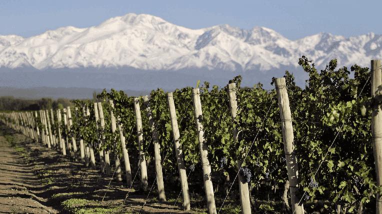 Roteiro do vinho em Mendoza na Argentina