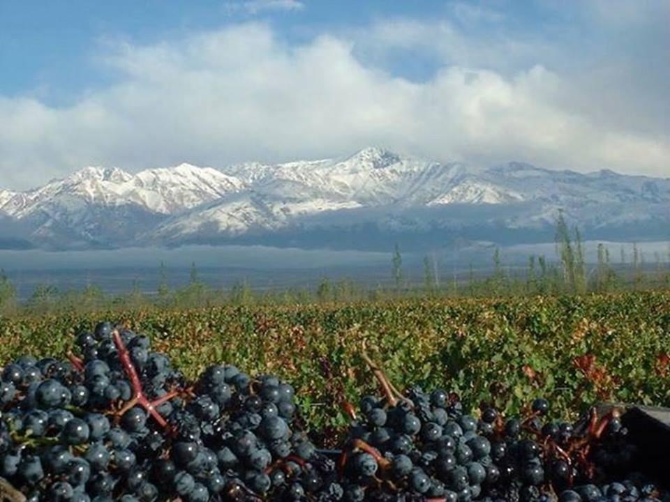 Montanhas e vinícolas durante o inverno em Mendoza