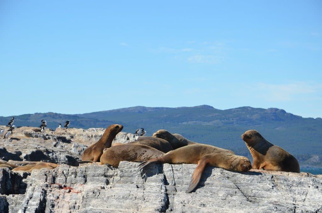 Animais marinhos avistados no passeio pelo Canal Beagle