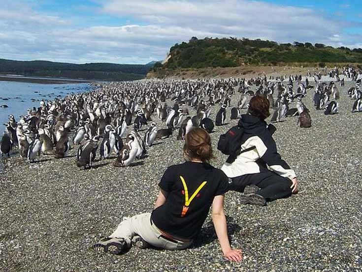 Pinguins na Ilha Martillo em Ushuaia